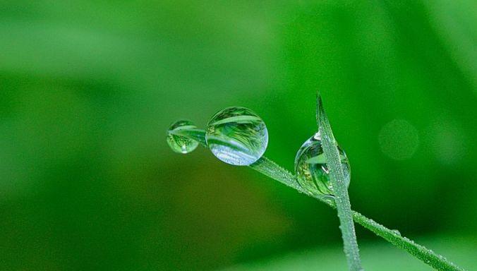 https://pixabay.com/photos/nature-drops-flower-plant-green-2310554/