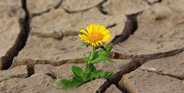 https://pixabay.com/it/photos/fiore-vita-crack-deserto-siccit%C3%A0-887443/